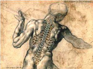 Spina.jpg